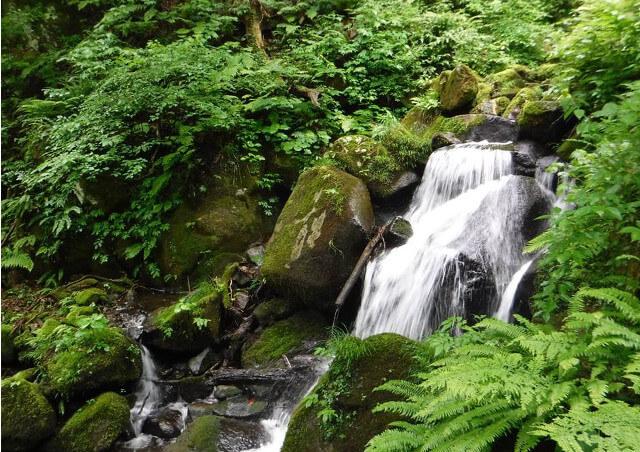 富山でひとり旅を提供する【エコロの森】の目指すエコツアーについて